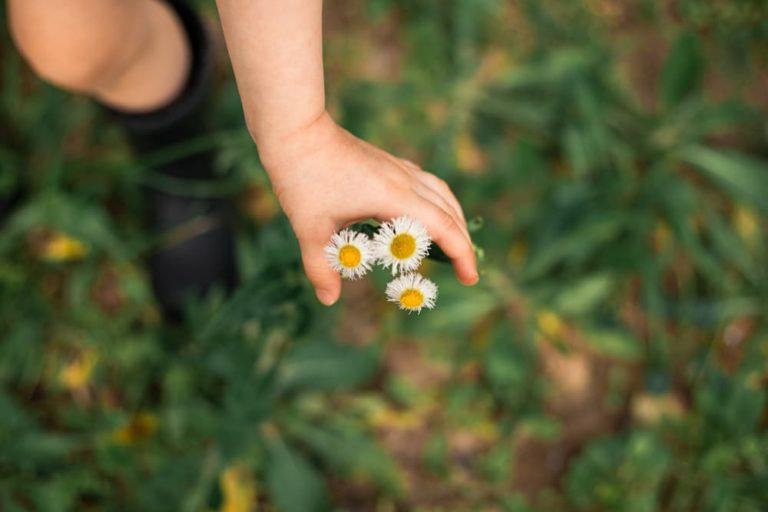 טיפול בפרחי באך לילדים